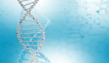 Hallan dos genes modificadores del riesgo de desarrollar cáncer de mama y ovario