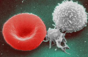 Groundbreaking study on trained immunity to fight cancer