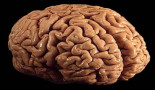 Breaching the blood-brain barrier to deliver precious payloads