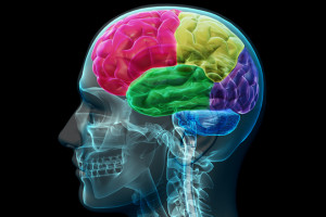 New study shows that different types of cancers are likely to spread to specific areas of the brain