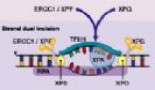 153-oxaliplatin-pre-clinical-perspectives-on-the-mechanisms-of-action-response-and-resistance