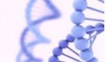 Identificadas las alteraciones genéticas que vuelven más agresivo un tumor cerebral