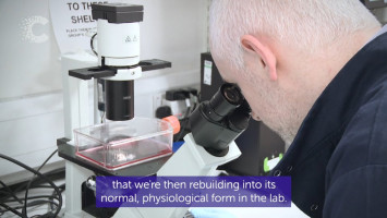 A new era in the early detection of cancer ( Cancer Research UK )