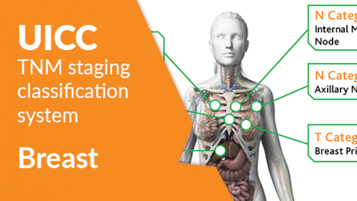 The UICC TNM Classification: Breast