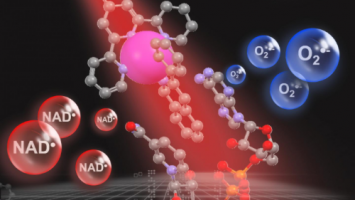 Light-activated metal catalyst destroys cancer cells' vital energy source
