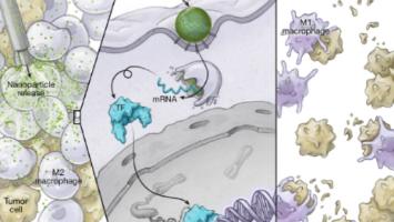 Nanotech turns pro-tumour immune cells into cancer-killing triple agents