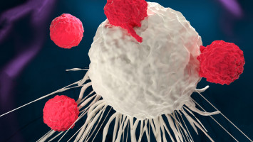 Engineered immune cells recognise, attack human and mouse solid-tumour cancer cells