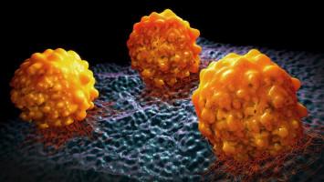 Las células cancerosas de la cabeza y el cuello secuestran el tejido sano cercano, lo que favorece la invasión de las células cancerosas