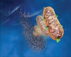 Researchers develop virus-based treatment platform to fight pancreatic cancer