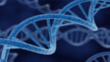 A normal DNA repair process can become a major source of mutations in cancer