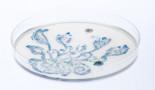 EHA 2020: La alteración de los microbiomas intestinales por el tratamiento con antibióticos en las primeras etapas de la vida es suficiente para inducir leucemia en ratones predispuestos