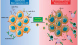 1149-oncolytic-virotherapy-new-weapon-for-breast-cancer-treatment