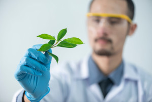 How a plant virus could protect and save your lungs from metastatic cancer