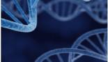 Investigadores demuestran por primera vez que las mutaciones silenciosas pueden predecir el desarrollo de las células cancerosas