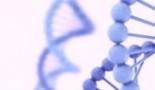 Los científicos describen el papel del gen objetivo p53 en el desarrollo del linfoma y el cáncer de pulmón